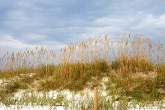 Seaoats on sand dune. Sea oats growing on a dune of white sand against a cloudy blue sky Royalty Free Stock Photos