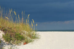 Seaoats by the sea Royalty Free Stock Photos