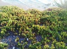 Seaplant Photo stock