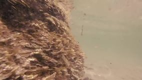 Seaplants che fa le montagne in Ibiza stock footage