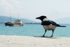 Seaport and a raven. Stock Image