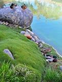 Seaport Village in San Deigo. The ducks love the ponds at Seaport Village stock photos