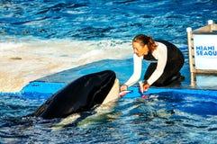Seaquarim con la balena Fotografie Stock