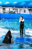 Seaquarium Miami, Floride royalty free stock images