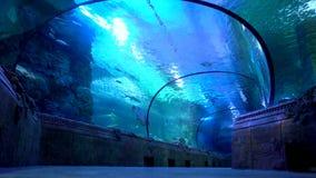 Seaquarium Oceanarium Turista in grande acquario Tunnel subacqueo video d archivio