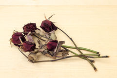 Sear red rose on plywood background. Picture stock photography