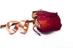 Sear rose Stock Photo