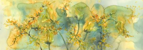 Sear yellow tulips watercolor background, dying flowers