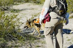 Search Dog. Search and rescue canine unit at work in the desert Royalty Free Stock Photography