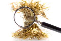 Search needle in a haystack. On white background Royalty Free Stock Image