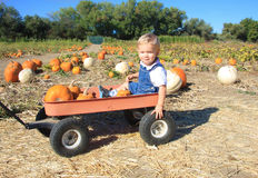 The Search for Pumpkins. Cute toddler boy sittingin a red wagon being pulled through a pumpkin patch Royalty Free Stock Photos