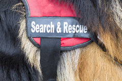 Search and rescue dog Royalty Free Stock Photography