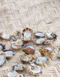 Searched Open pearl oysters at shallow DOF Stock Images
