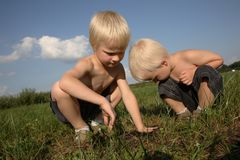 Searching. Two boys squat in a field, searching for something through the grass royalty free stock photos
