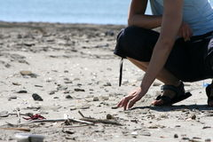 Searching. Woman searching shells in the sand Royalty Free Stock Photo