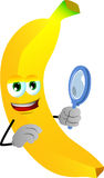 Searching banana with magnifying glass Royalty Free Stock Image