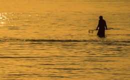 Searching for Clams. Silhouette of a man searching for clams near sunset in the Indian River Inlet in Delaware stock image