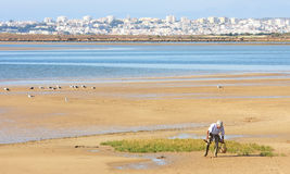 Searching for cockles near Alvor, Portugal Stock Image