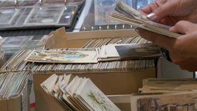 Searching for a collection of old postcards. Collectors of historical photographs and postcards stock video footage