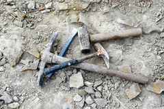 Searching with fossils with hammer Stock Images