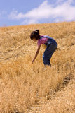 Searching for leftover wheat stalks Royalty Free Stock Photos