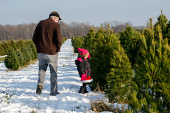Searching for the perfect Christmas  tree Stock Photos