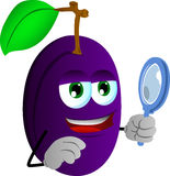 Searching plum with magnifying glass Stock Photos