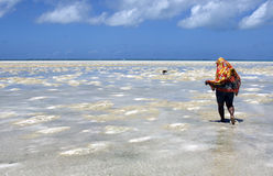 Searching for shellfishes under noonday sun Stock Photos