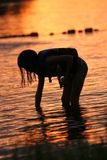 Searching for Shells at Sunset Royalty Free Stock Photography