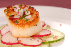 Seared Scallop Royalty Free Stock Photos