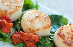 Seared Scallop Appetizer Royalty Free Stock Photos