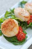 Seared Scallop Appetizer Royalty Free Stock Images