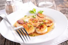 Seared scallop. Close up on seared scallop royalty free stock images