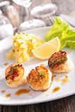 Seared scallop Royalty Free Stock Image