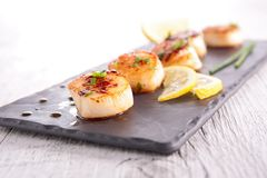 Seared scallop. Close up on seared scallop stock images