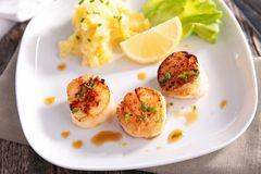 Seared scallop Stock Image