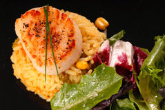 Seared scallop on saffron rice with salad stock photo