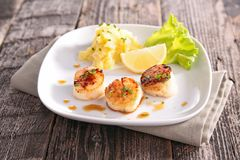 Seared scallop Stock Photography