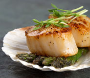 Free Seared Scallops Stock Images - 30965724