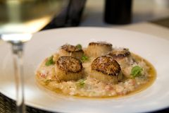 Seared scallops on a bed of risotto Stock Photos