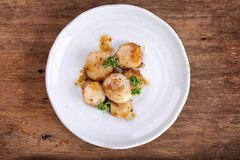 Seared scallops Stock Images