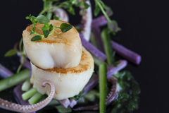 Seared scallops Stock Image