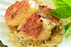 Seared scallops with creamy herb butter sauce Royalty Free Stock Photography