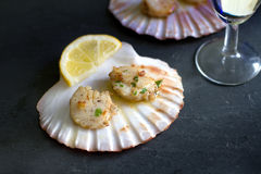 Seared scallops with garlic and parsley on shell Stock Photography