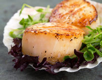 Seared scallops on lettuce Stock Photography
