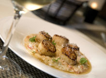 Seared sea Scallops on Risotto Royalty Free Stock Photography
