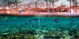Seargent fisk och stranden Arkivbilder