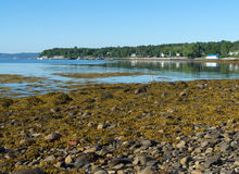 Searsport Maine town pier in distance Royalty Free Stock Images