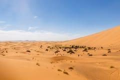 The seas of dunes of Erg Chebbi. Near Merzouga in southeastern Morocco Royalty Free Stock Photo