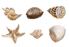 Seas shells watercolor Stock Photo